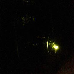 Lightening Bugs2